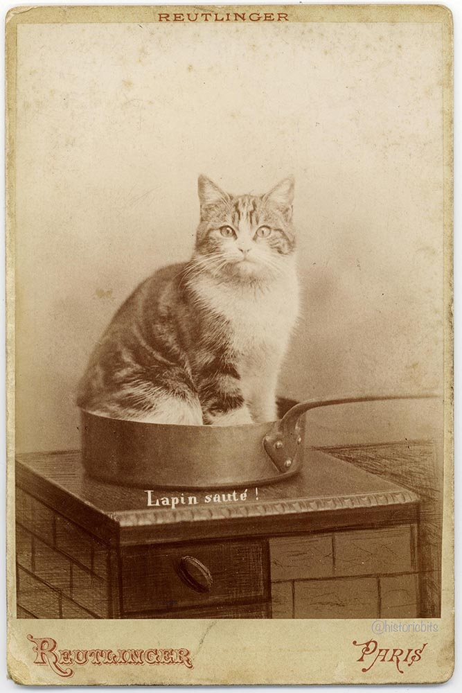 Lapin Saute, humour, cat, katze, humor, cabinet photo, by  Ch. Reutlinger, Paris, ca. 1875-80