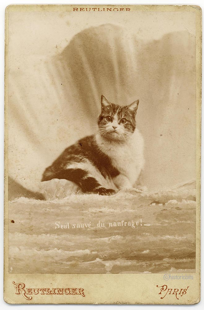 Seul sauve  du naufrage!, humour, cat, katze, humor, cabinet photo, by  Ch. Reutlinger, Paris, ca. 1875-80