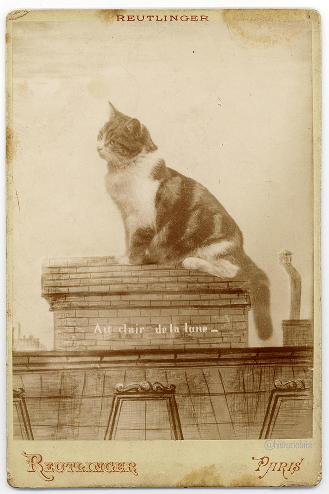 au clair de la lune, humour, cat, katze, humor, cabinet photo, by  Ch. Reutlinger, Paris, ca. 1875-80