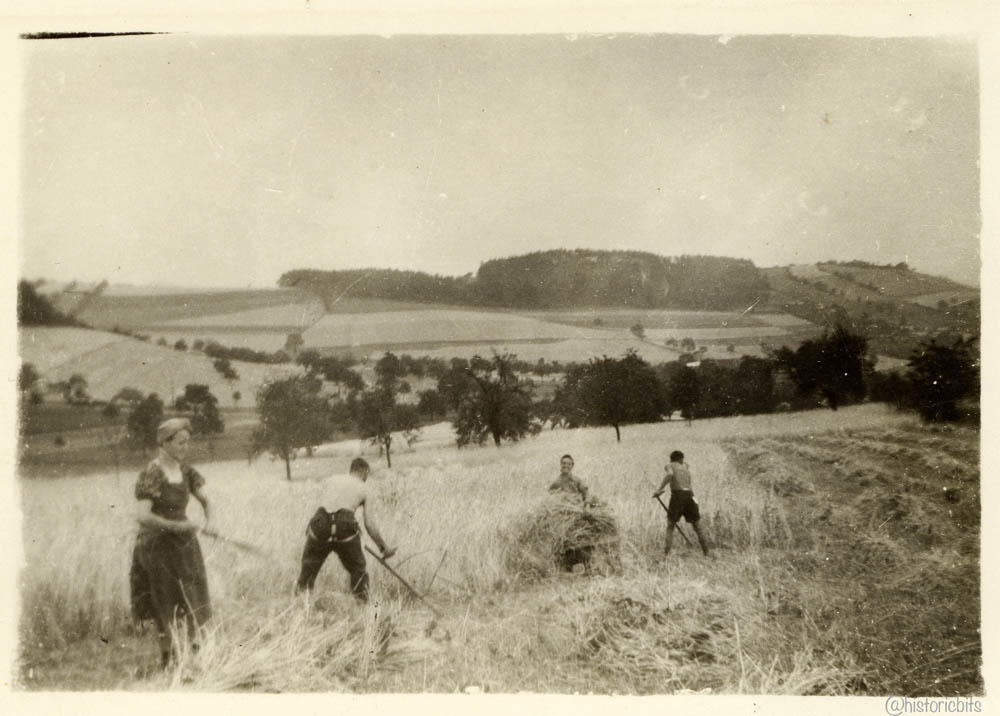 Harvest,Germany,1930s