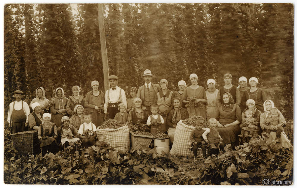 Hops Harvest,c.1925,Germany