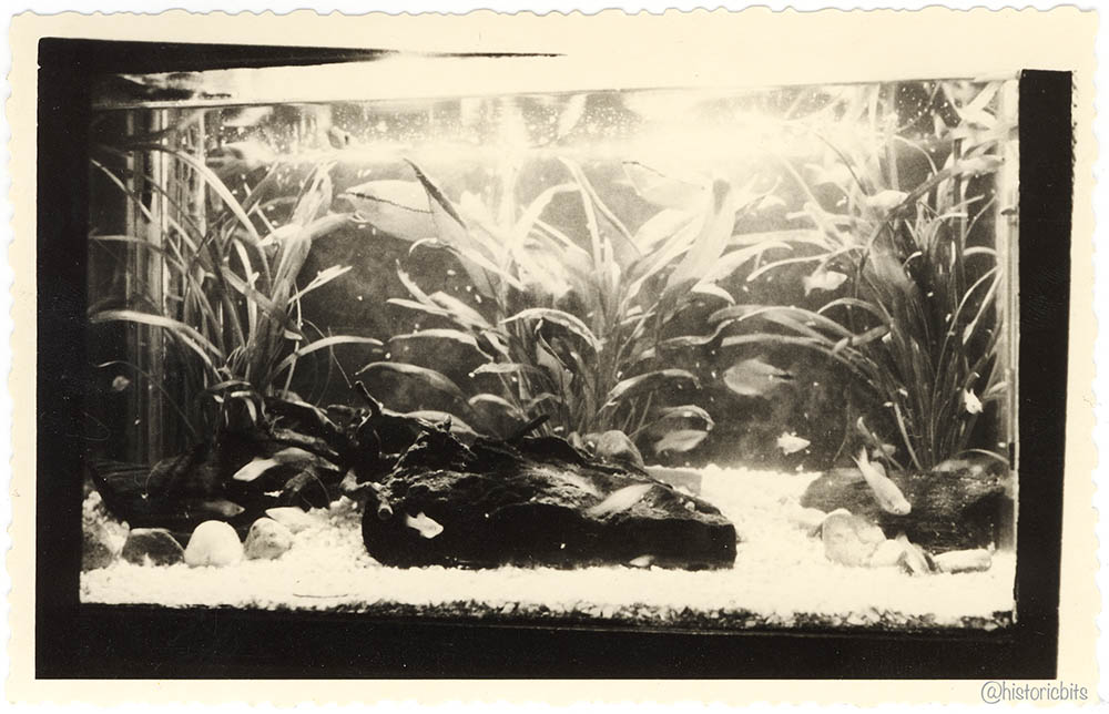 Aquarium,Germany,c.1950